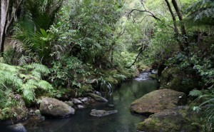 Adventures-NW-Waitakere-Ranges-Regional-Park                          _-5