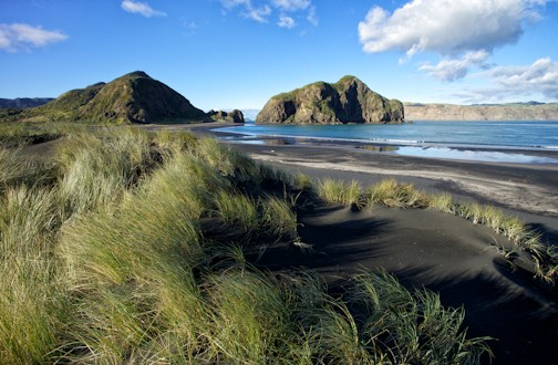 Explore New Zealand's Waitakere Ranges Regional Park