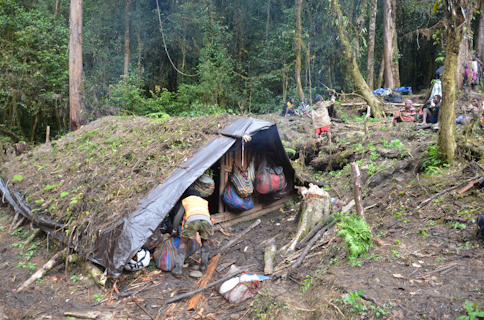 Jungle Camp Two
