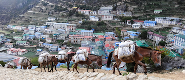 Mules packing provisions toward Everest Base Camp from Namche Bazaar