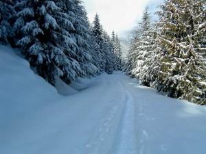 The White Salmon Road