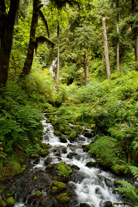 In the Hoh Rain Forest. Photo by Jennifer Johnson