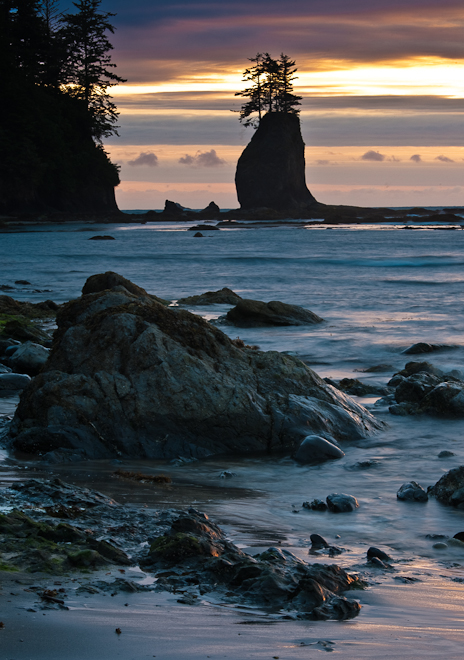 Near the Ozette River. Photo by John D'Onofrio
