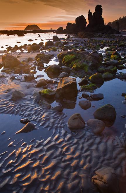 Near Kayostla Beach on the Ozette-Rialto Traverse. Photo by John D'Onofrio