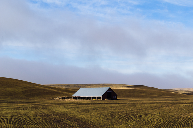 Scenes of pastoral beauty are commonplace along the backroads of the Palouse. Photo by Aaron Theisen