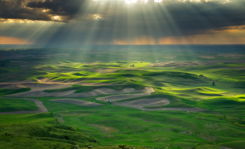 The Palouse spreads out like a green carpet in spring. Photo by Javier Acosta