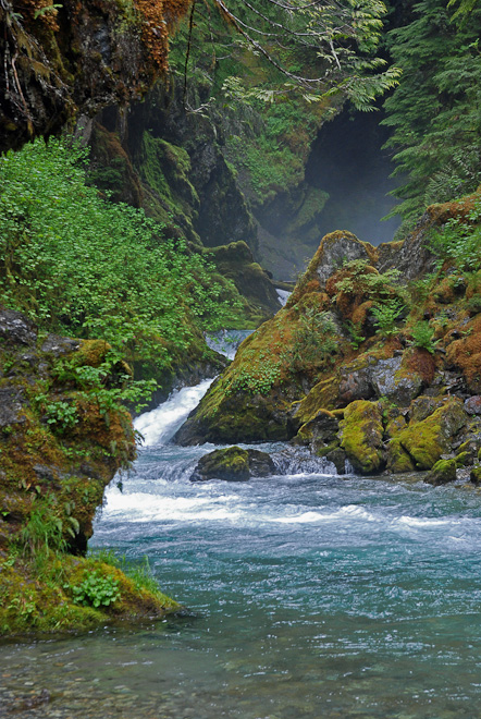 Ruth Creek, a tributary of the Nooksack. Photo by Rich Bowers