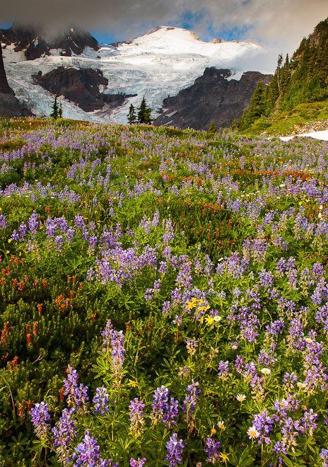 Mt. Baker and wildflowers. Photo by John D'Onofrio