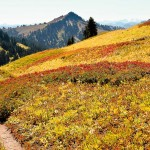 The PCT, south of White Pass