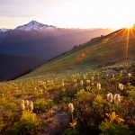Bear Grass on Miners Ridge, Glacier Peak