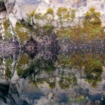 Nature's tapestry reflected in unusually calm mirror-like conditions