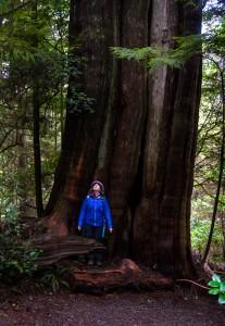 The Ancient Cedars Loop