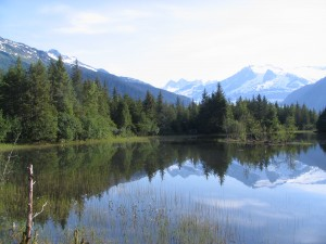Tongass National Forest courtesy of Daniel Cornwall Flickr Creative Commons