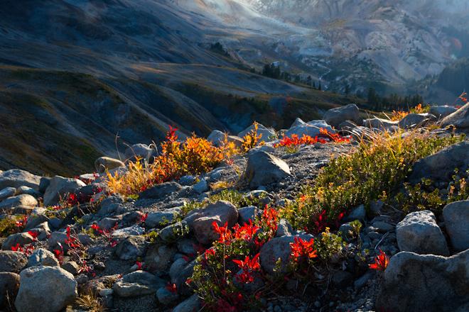 Autumn Color, Mt. Baker Wilderness, WA.