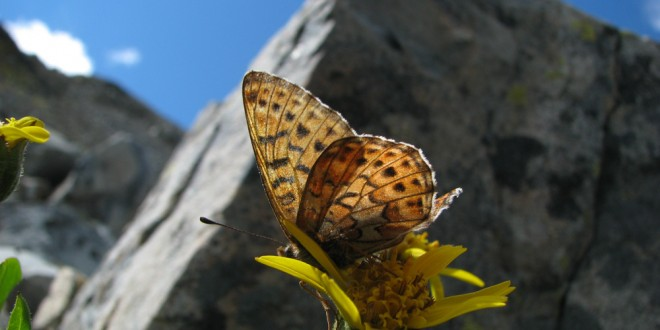 A Passion for Fluttering Wings:  Six Great Butterfly Adventures in Cascadia