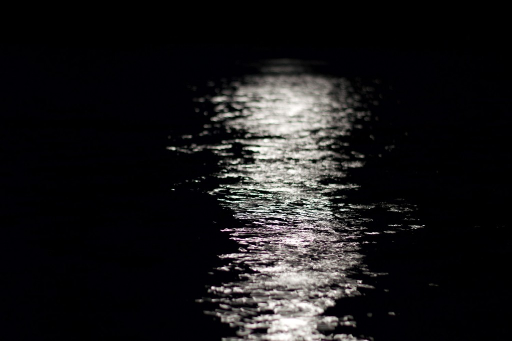 Sweet Moonlight. Photo by Dallas Betz