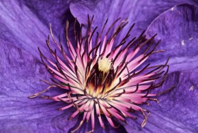 The Colors of Spring: Bob Turner's Flowers