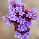 Flowers3-16