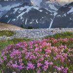 Mount Shuksan viewed from wildflower meadows of Hannegan Peak, Mount Baker Wilderness