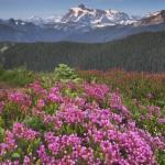 Mount Shuksan seen from wildflower meadows on Skyline Divide, Mount Baker Wilderness.