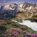 Eldorado Peak and meadows of pink mountain heather, North Cascades National Park.