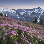 Ruth Mountain and Mount Shuksan viewed from wildflower meadows of Hannegan Peak, Mount Baker Wilderness.