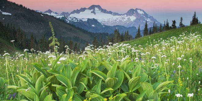 Reimagining the Wilderness