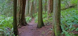 Top Ten Winter Hikes in Whatcom County