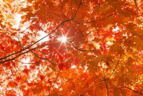 Autumn's Reminder